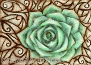 Echeveria Plant Art - Flower Magnet - Green Rose Drawing by aquariann on Etsy